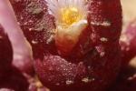 Flora_Namibia010