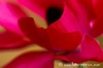 Flora_S_dafrika013