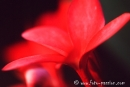 Flora_Namibia702