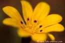 Wiesenblume020