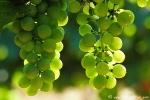 Wein002