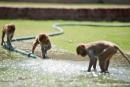 Rhesusmakaken beim Wasserspiel - Red Fort