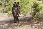 Auf dem Elefanten zur Tiger-Show