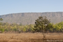 Im Bandhavgarh National Park