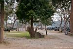 Die Jeeps warten im Camp auf ihre Safari-Gäste