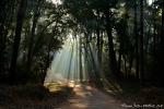 Das Morgenlicht bricht sich im Wald