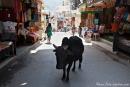 Eine heilige Kuh macht ihren Stadtbummel