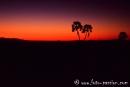 Sonnenuntergang_Palmwag702