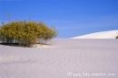 White_Sands038