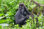 Park National Volcans (Ruanda)