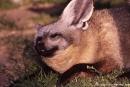 Loeffelhund703