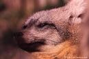 Loeffelhund705