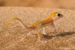 Namib-Wüste Namibia