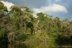 Im Cuyabeno Nature Reserve