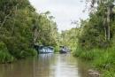 Auf dem Sekonyer in den Regenwald