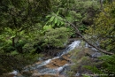 Die Leura-Kaskaden durchziehen den Regenwald - Blue Mountains NP