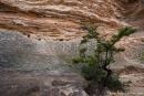 Am Ende der Hat Hill Road im Grose Valley gibt es verwitterte Sandsteinformationen und erodierte Sandsteinhöhlen - Blue Mountains NP