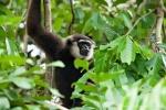 Indonesien - Insel Borneo - Tanjung Puting Nationalpark