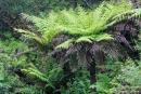 Flora Australiens