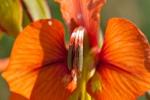 Flora West Coast