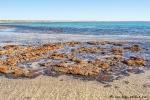 Unscheinbare Stomatolithen, die aus Bakterien bestehen