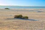 Shell Beach - ein Strand aus Milliarden kleiner weißer Muscheln