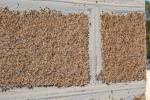 Muscheln liefern einen natürlichen Baustoff