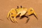 Abends sind die Krabben unterwegs