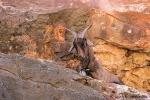 In den Felswänden der Mandu Mandu Gorge lässt sich offenbar gut ruhen