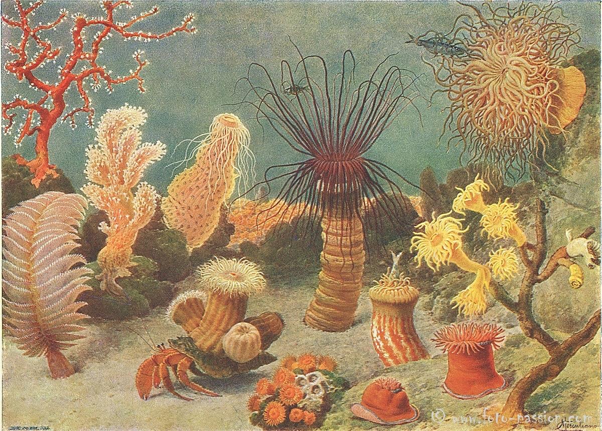 Darstellung der bunten Unterwasserwelt aus einem alten Naturkundebuch (ca. 1926)