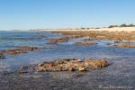 Stomatolithen, die aus Bakterien bestehen, die als die ältesten Lebenwesen der Erde gelten