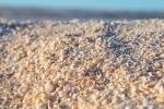 Ein breiter Strand, der nur aus Muscheln besteht