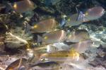 Die Unterwasserwelt ist atemberaubend