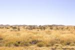 Landschaft im Westen Australiens