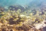 Bunte Unterwasserwelt des Ningaloo Reef