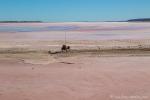 Skurriles am Pink Lake