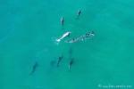 Eine Gruppe von Delfinen jagt zusammen