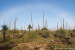 Nebelbogen über den Grasbäumen des Wanagarren Nature Reserve