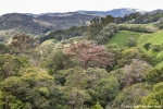 Nebelwaldregion Monteverde