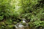 Im Hochlandregenwald von Monteverde