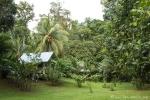 Tamandua-Camp