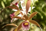 Das Klima ist ideal für Orchideen