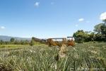 Hier gibt es sogar Erntemaschinen - Ananasplantagen von Del Monte