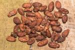 Bereits getrocknete, fermentierte Kakaobohnen