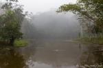 Mystische Regenwaldstimmung