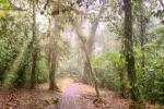 Gepflasterter Dschungel