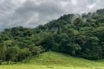 Regenwald am Fuß des Vulkans Arenal