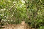 Dschungelweg im Cahuita NP