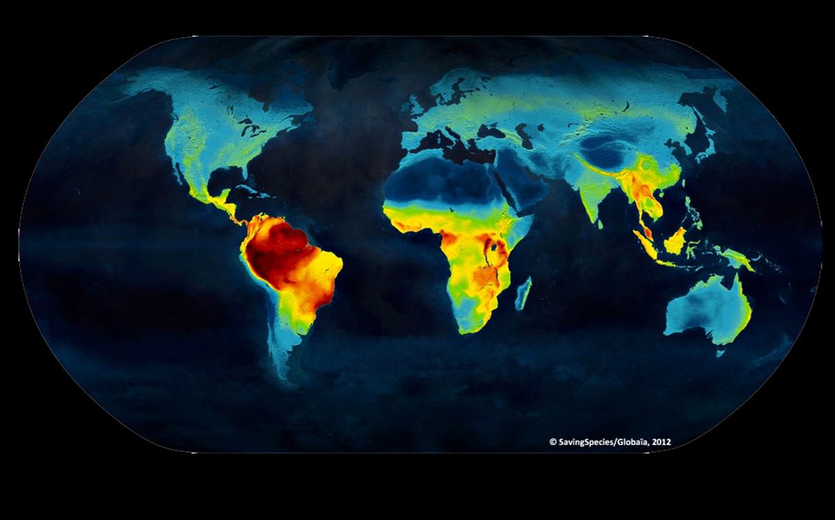 Die Biodiversität (Artenvielfalt) auf der Welt. Ecuador und besonders das Amamzonasbecken (dunkelrot eingefärbt) hat die größte Artenvielfalt weltweit.
