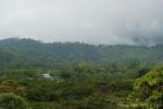 Rundherum wird der Regenwald zurückgedrängt
